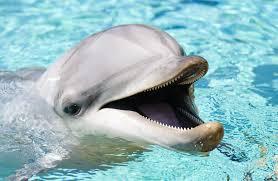 Curiozitati despre obiceiurile de somn ale delfinilor