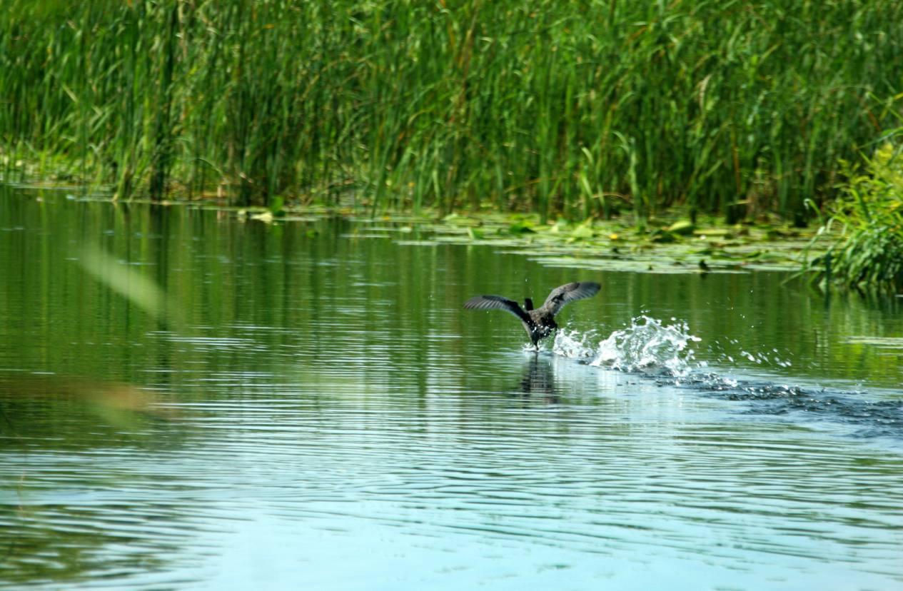 Frumusetile patriei din Delta Dunarii