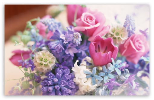 Florile au un loc special in vietile noastre